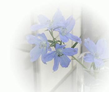 ブルー花ikko